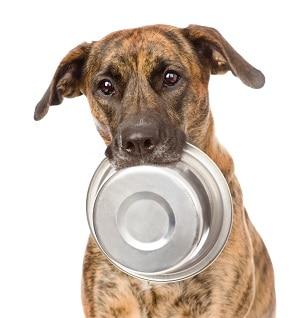 Ernährung für Hunde