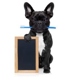 Zahnreinigung für Hunde
